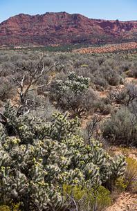 赤い地層の堆積岩が作り出した山を背景に広がる砂漠地帯と植物の写真素材 [FYI03127077]