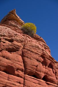 青空に向かって隆起する赤い堆積岩とそこに咲く砂漠性の植物の写真素材 [FYI03127092]