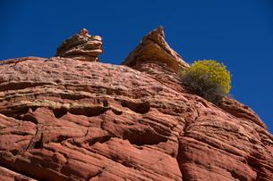 砂漠地帯に隆起する赤い堆積岩に生える乾燥に順応した植物の写真素材 [FYI03127099]