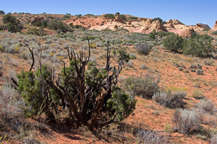 荒野の隆起した堆積砂岩と乾燥地帯に順応して生える植生の写真素材 [FYI03127100]