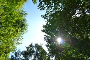 見上げた森とその上に広がる空の写真素材 [FYI03127326]