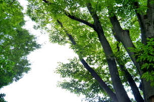 明るいみどりの木々の写真素材 [FYI03127329]