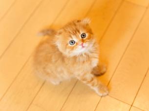 かわいい仔猫の写真素材 [FYI03127404]