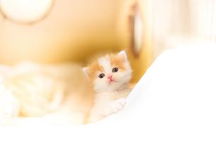 かわいい仔猫の写真素材 [FYI03127410]