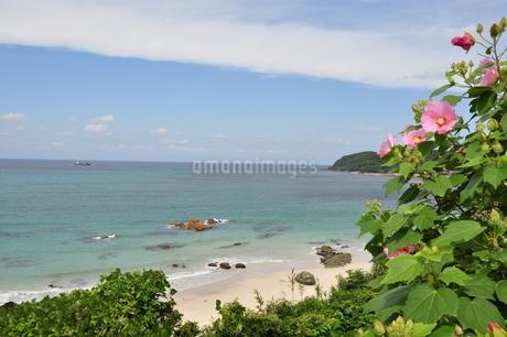 青空とビーチと夏の花の写真素材 [FYI03127542]