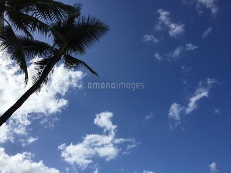 hawaiiの写真素材 [FYI03127552]