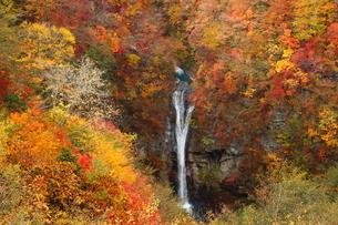 絶景紅葉の那須駒止めの滝の写真素材 [FYI03127617]