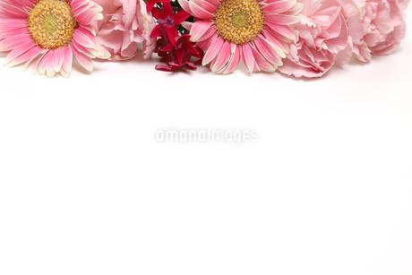ガーベラ、ペンタスとカーネーションの花束 の写真素材 [FYI03127639]