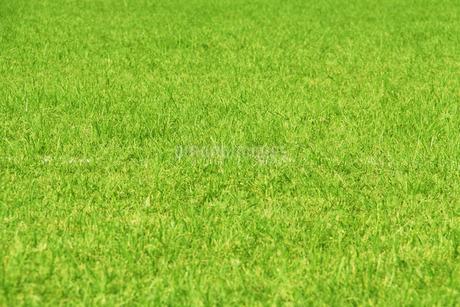 芝生のテクスチャの写真素材 [FYI03127659]