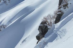 冬晴れの山の斜面とダケカンバ(宝剣岳)の写真素材 [FYI03127707]