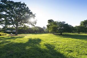 木場公園の朝の写真素材 [FYI03127808]