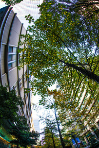 ビジネス街のオフィスビルと新緑の写真素材 [FYI03127853]