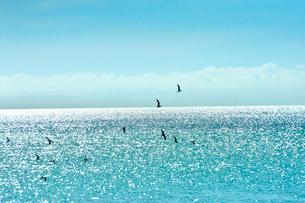 ニューカレドニア ウヴェア島のキラキラ光る水平線と群れ飛ぶ野鳥と青い空の写真素材 [FYI03127881]