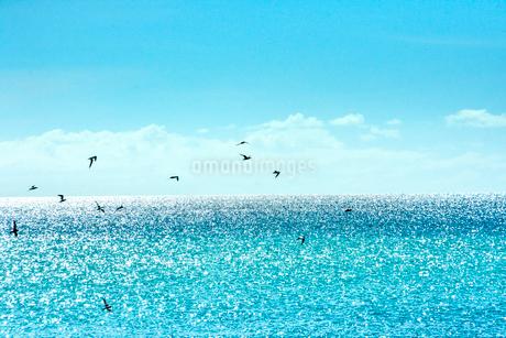ニューカレドニア ウヴェア島のキラキラ光る水平線と群れ飛ぶ野鳥と青い空の写真素材 [FYI03127882]