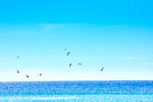 ニューカレドニア ウヴェア島の青い海の水平線と群れ飛ぶ野鳥と青い空の写真素材 [FYI03127883]