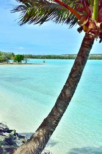 ニューカレドニア ウヴェア島の澄み切った青い海とヤシの木と島の写真素材 [FYI03127887]