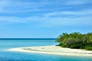 ニューカレドニア ムリ島の澄み切った青い海のビーチと緑の木々と水平線と青い空の写真素材 [FYI03127891]