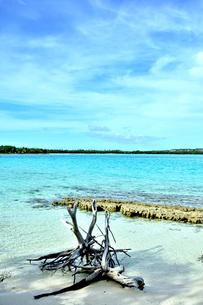 ニューカレドニア ウヴェア島の澄み切った青い海と流木と空と島の写真素材 [FYI03127894]