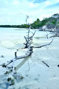 ニューカレドニア ウヴェア島の白い砂浜に流れ着いた流木と緑の木々の写真素材 [FYI03127900]