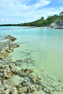 ニューカレドニア ウヴェア島の澄み切った青い海と岩礁と木々と空の写真素材 [FYI03127905]