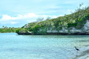 ニューカレドニア ウヴェア島の透き通った青い海とクロサギと空の写真素材 [FYI03127914]