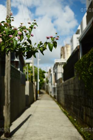 路上にはみ出るランタナの花の写真素材 [FYI03127919]