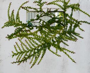 南国沖縄の花ブロックにツタが這っているの写真素材 [FYI03127927]