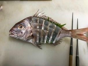和食;鯛の活け造りの写真素材 [FYI03127935]