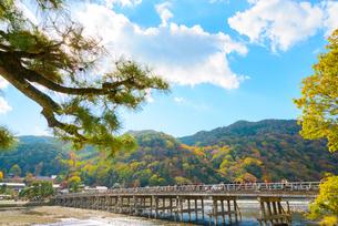 京都 紅葉の嵐山と渡月橋の写真素材 [FYI03127947]