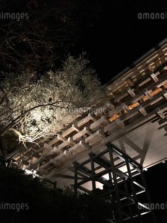 桜 夜景 建物の写真素材 [FYI03128113]