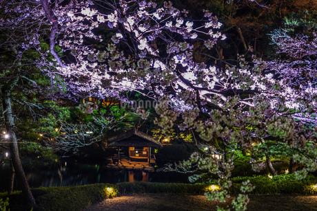 春の日本庭園のイメージの写真素材 [FYI03128139]