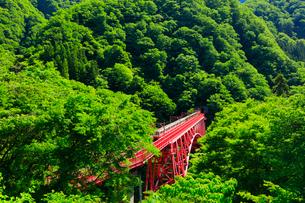 新緑の黒部峡谷鉄道トロッコ電車の写真素材 [FYI03128374]