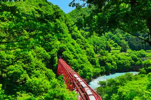 新緑の黒部峡谷鉄道トロッコ電車と清流の写真素材 [FYI03128379]