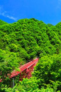 新緑の黒部峡谷鉄道トロッコ電車の写真素材 [FYI03128386]