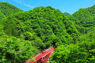 新緑の黒部峡谷鉄道トロッコ電車の写真素材 [FYI03128388]
