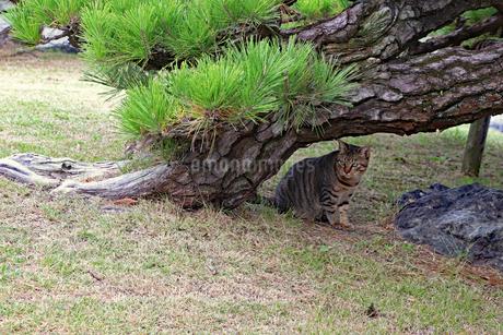 庭園に潜むネコの写真素材 [FYI03128485]