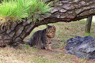 木陰に潜むネコの写真素材 [FYI03128486]