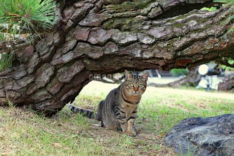 木陰のネコの写真素材 [FYI03128487]
