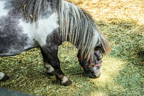 牧場のポニーのイメージの写真素材 [FYI03128561]