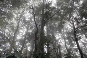 霧がかかる森(高尾山)の写真素材 [FYI03128581]