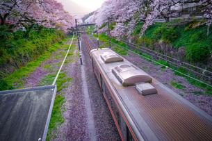 春の山北駅(神奈川県足柄上郡)の写真素材 [FYI03128592]