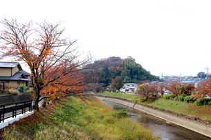 竜田川と三室山の写真素材 [FYI03128849]