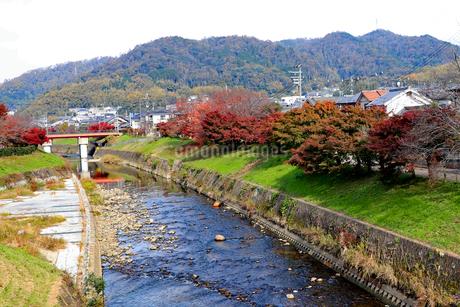 秋の竜田川の写真素材 [FYI03128865]