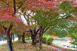 秋の竜田公園の写真素材 [FYI03128980]