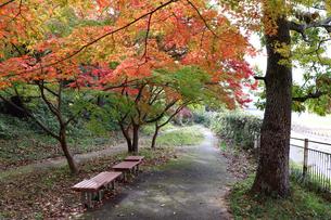 秋の竜田公園の写真素材 [FYI03128992]