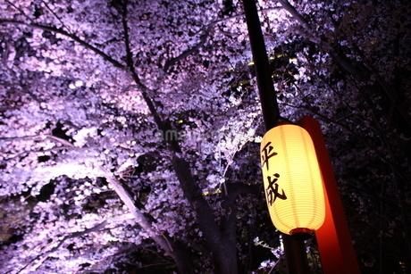 桜の写真素材 [FYI03129304]