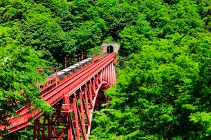 新緑の黒部峡谷鉄道トロッコ電車の写真素材 [FYI03129490]