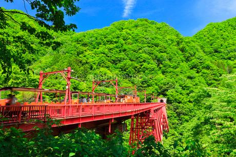 新緑の黒部峡谷鉄道トロッコ電車の写真素材 [FYI03129492]