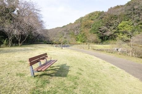 公園のベンチの写真素材 [FYI03129587]