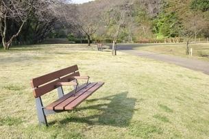 公園のベンチの写真素材 [FYI03129588]